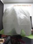 2013-2-27 胡蝶蘭鉢